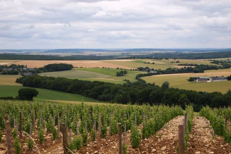 View of the vineyards from the Maison de Sancerre, Loire Valley, France.