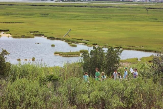 The Back Bay Wetlands Institute offers a chance to discover the area's natural surroundings.