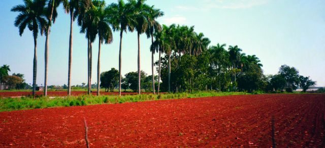 Cuba's naturally fertile soil, red in color, is rich in minerals and provides unique agricultural conditions.