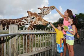 Miami: Things to Do as a Family