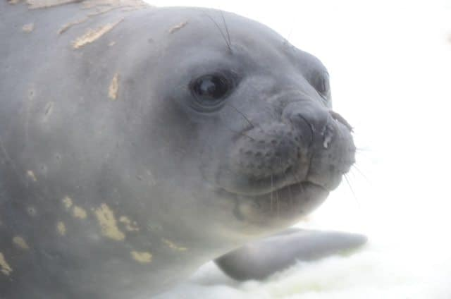 Seals are just as curious about humans as we are about them.