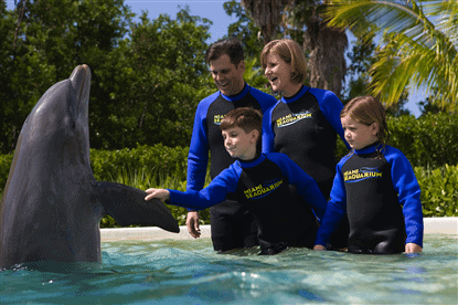 Meet dolphins at the Seaquarium.