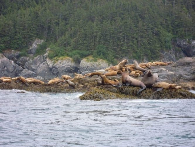 Seals on the rocks in Alaska. Just another part of the great views.