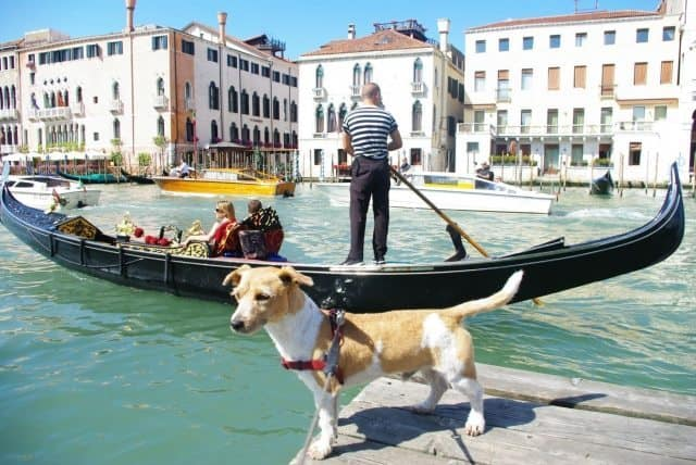Thinking about taking your pet on a trip to Italy? Read all about one traveler's adventure with his best friend!