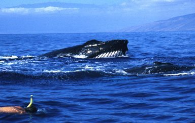 """""""Finding a pod of whales was just the beginning of the fun. """""""