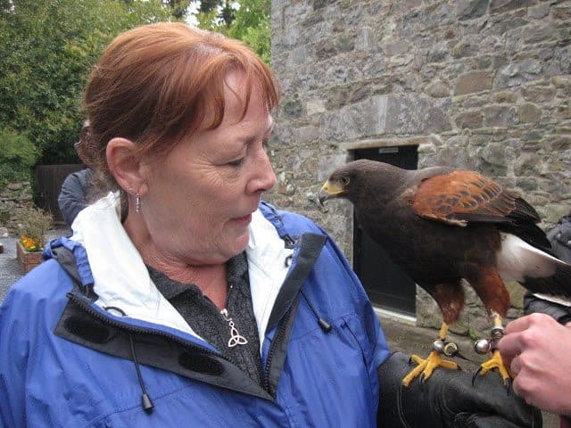 Our falconer, Ed, tethers Samhradh to my glove before we leave the aviary. Ginger Warder photo.