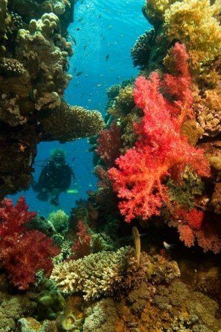 Scuba diving in the Red Sea. Linda and Shahar Shabtai Photos.