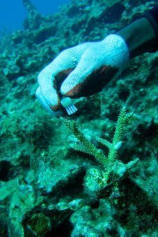 Toothbrush for cleaning the coral