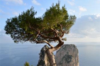Capri, Italy: Holiday off the Coast of Naples