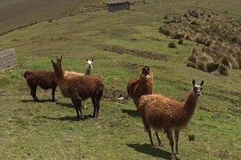 Peru: A Strong Connection to the Earth