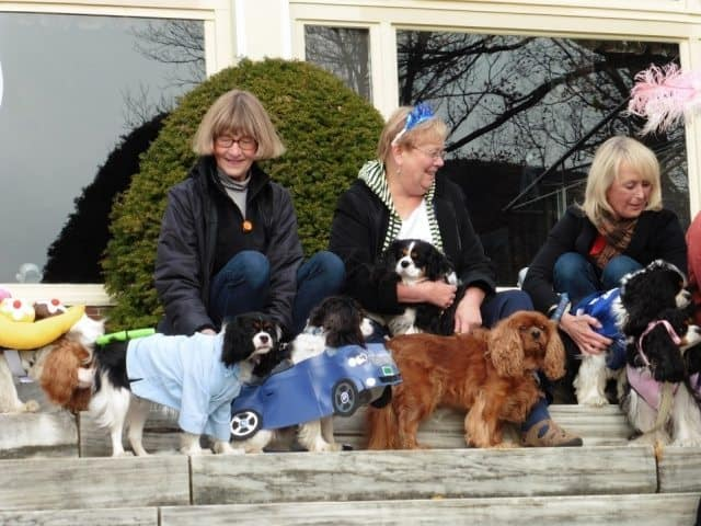 Dogs dressed up during a special event at the inn.