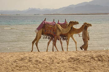 Egypt: The Exotic Resorts of Soma Bay