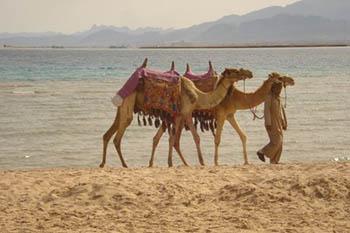 Egypt: The Exotic Resorts of Soma Bay