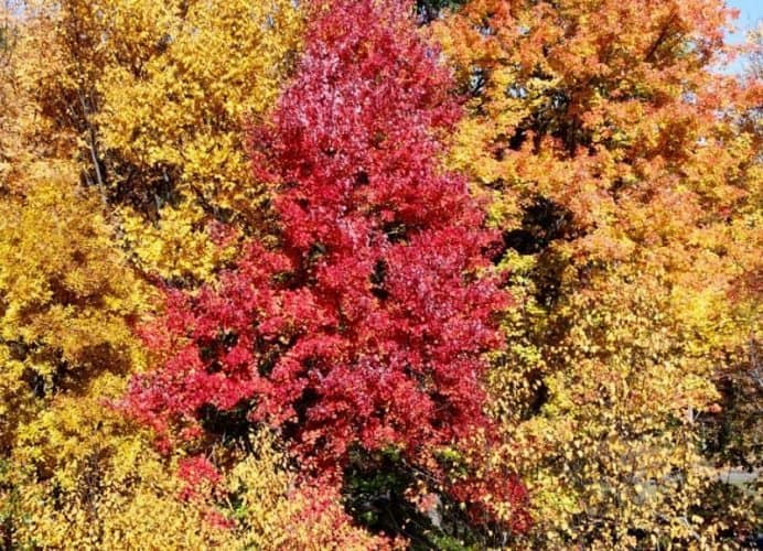 Foliage at its peak in upstate New York.
