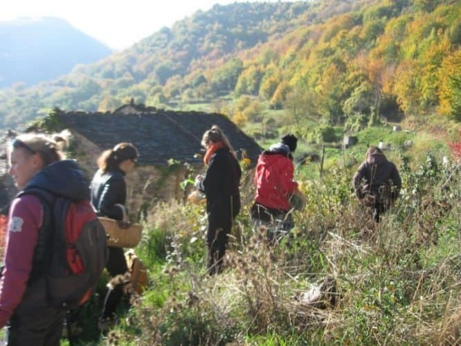 Foraging for edible plants in Cevennes National Park, Languedoc-Roussillon, France. Ginger Warder photos.
