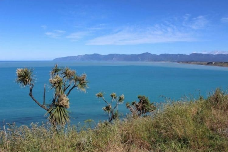 Cape Palliser view.