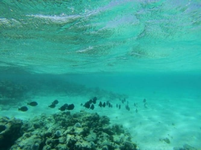 A shoal of fish over a reef outcrop.