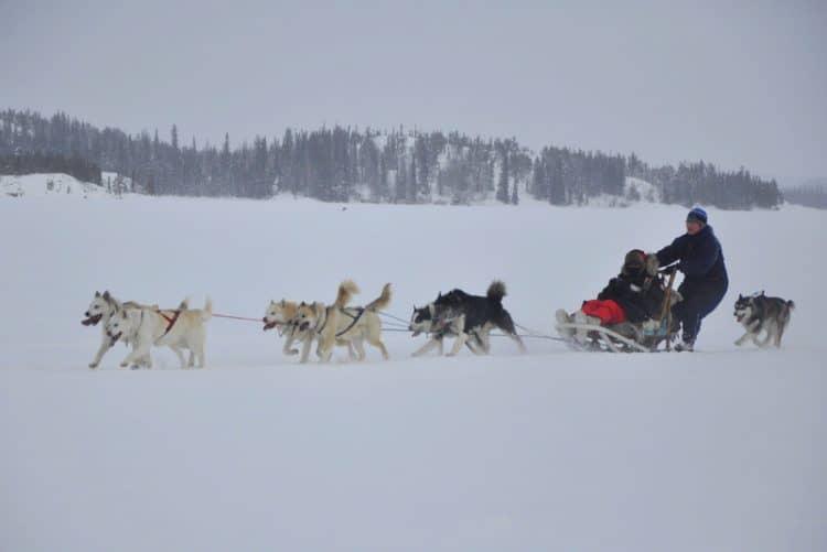 Dog Sledding Frozen Lake Yellowknife