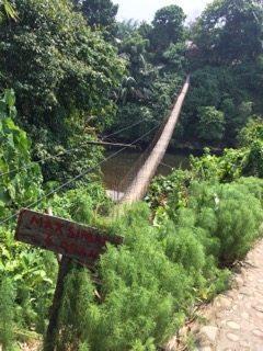 Bridge to Tangkahan. elephants