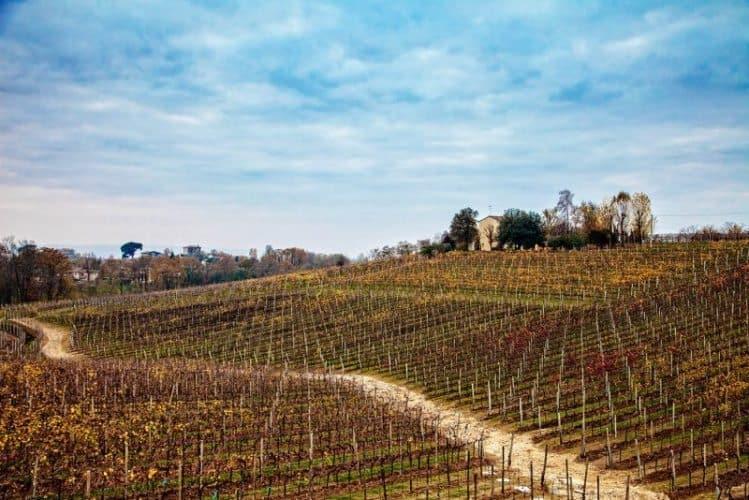 Toffoli vineyards.