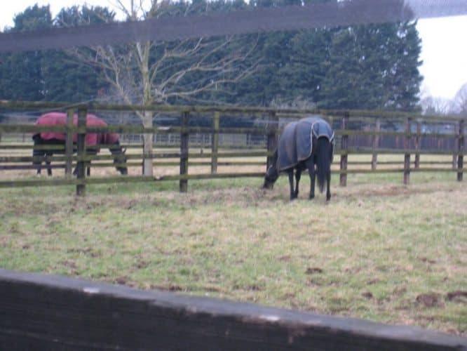 Newcastle equine scene.
