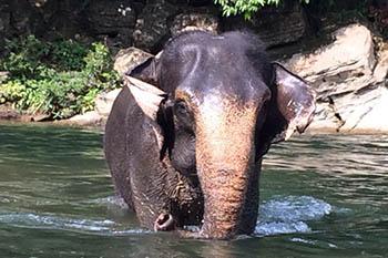 Indonesia: Washing Elephants in Sumatra