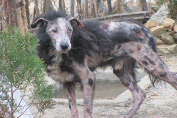 Kathmandu: Animal Nepal Rescues Stray Dogs 1