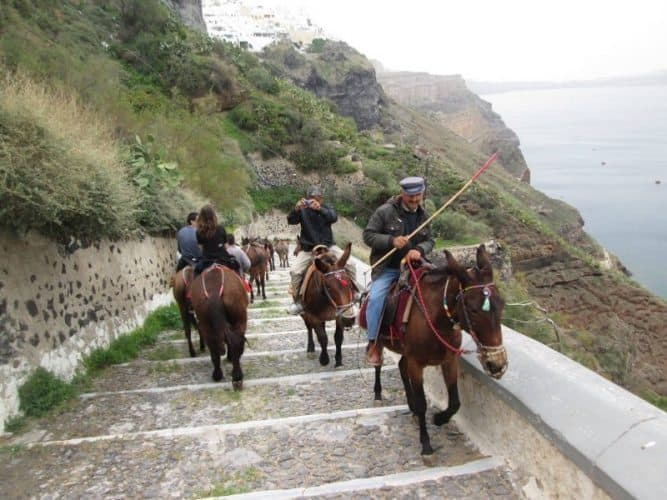 Donkeys on the way to Fira
