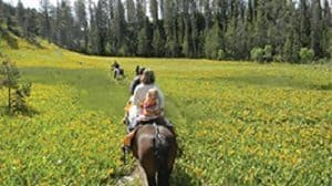 Horseback is a great way to appreciate the natural beauty of Wyoming