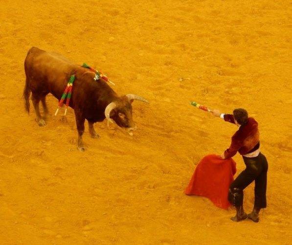 Faceoff between the bull and the fighter. Edward Yatscoff pics.