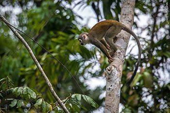 Ecuador: Hiking the Amazon Forest