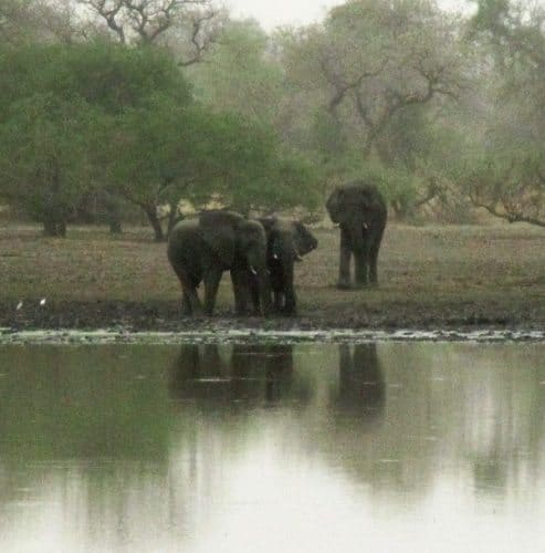 Elephants at water hole.