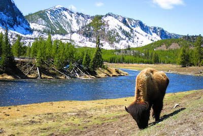 See Wyoming's Wildlife & National Parks This Summer 1