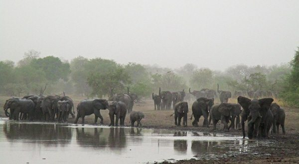 A herd of elephants.
