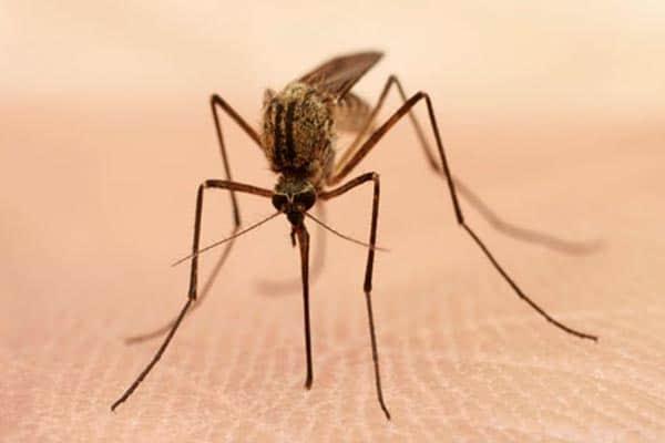 Staying Bug-Free in Zika Territories
