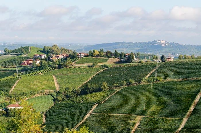 Vineyards in the Langhe from Ada Nada