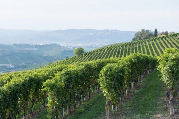 Wine Tasting in Italy's Piedmont: Photo Gallery