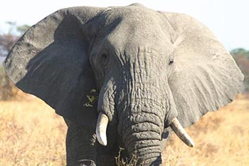 Kenya: on Safari 8 km from Nairobi