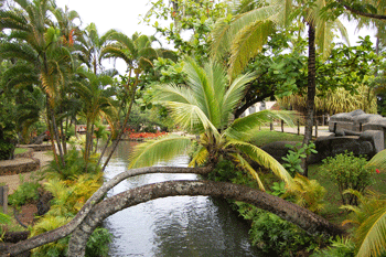 The famous palm tree at the Polynesian Cultural Center