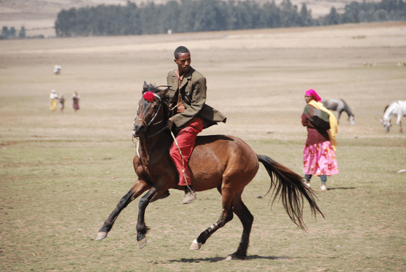 An Oromo horseman gallops along the plains in Bale