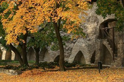 Autumn colours in Tallinn.