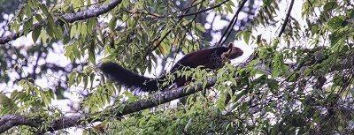 Parambikulam Tiger Reserve, Kerala - Southern India 6