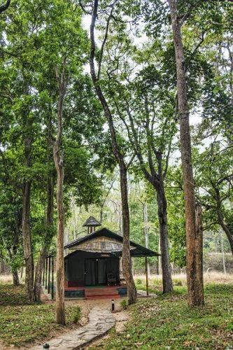 Parambikulam Tiger Reserve, Kerala - Southern India 3
