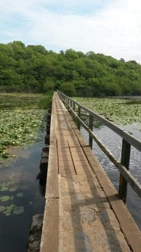 Lily Pond Bridge