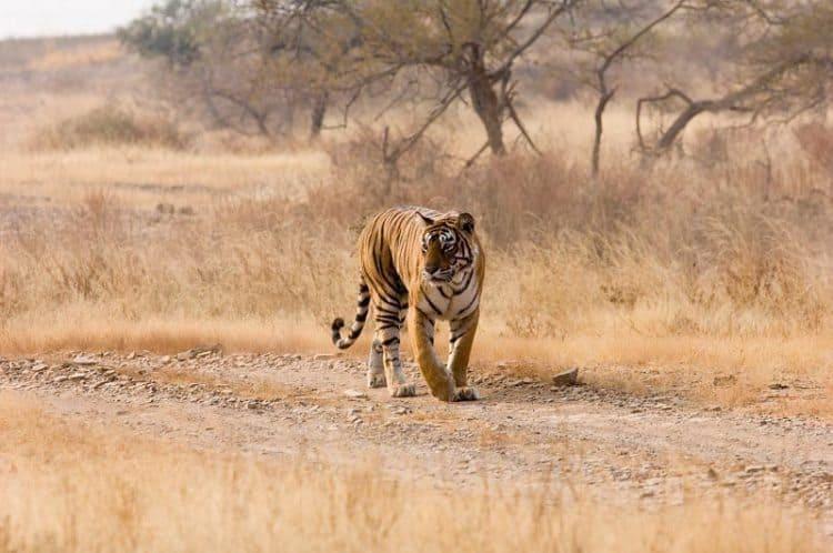 Parambikulam Tiger Reserve, Kerala - Southern India 1