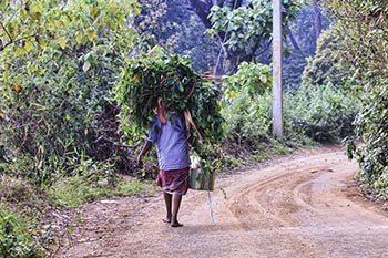 Windermere Estate: India's Cardamom Plantation