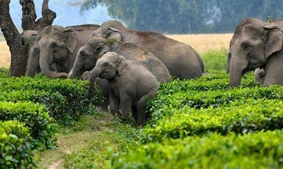 Help elephants while on vacation.