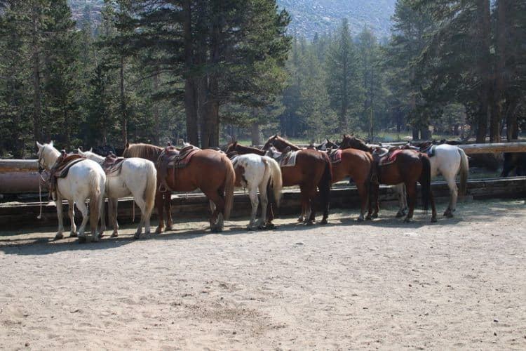 Horses waiting for riders.