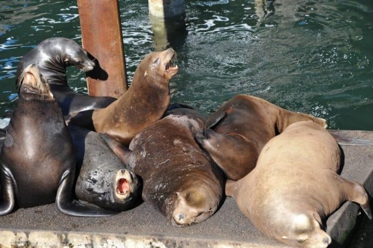 Sea lions delight the crowds in Newport, south of Portland, Oregon.