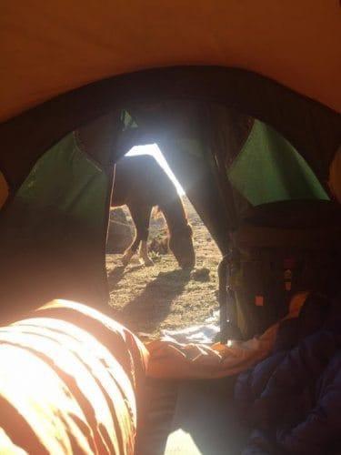 tent horse